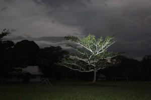 Tree at night with side illumination