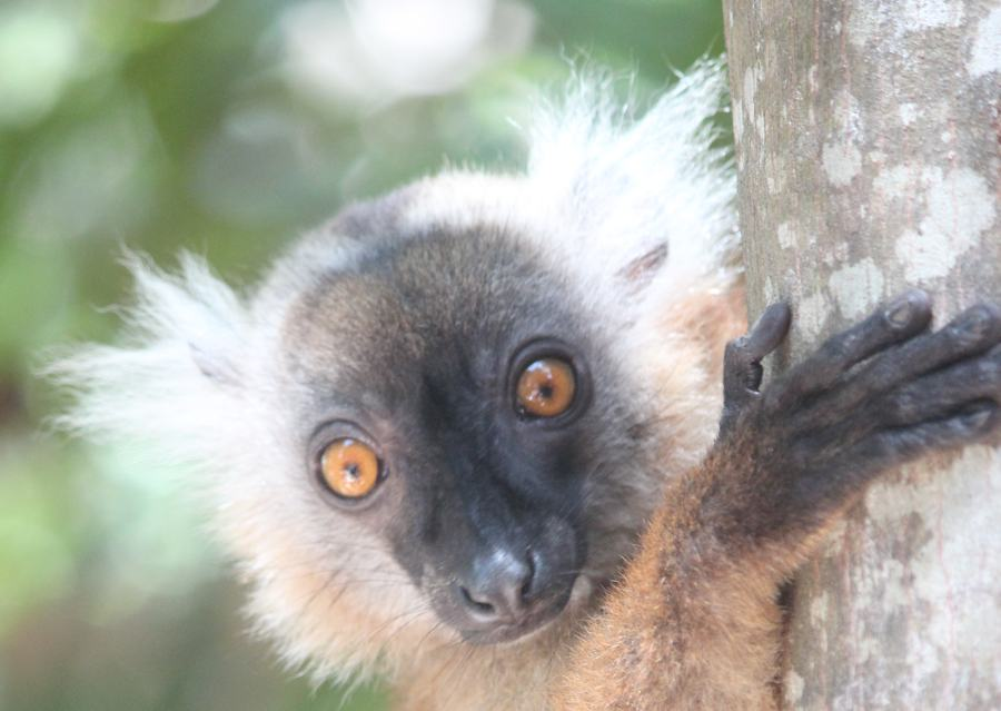 What You Need to Know About Traveling in Madagascar